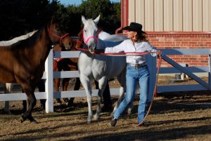 Em working horses in corral